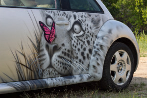 рисунки на авто фото