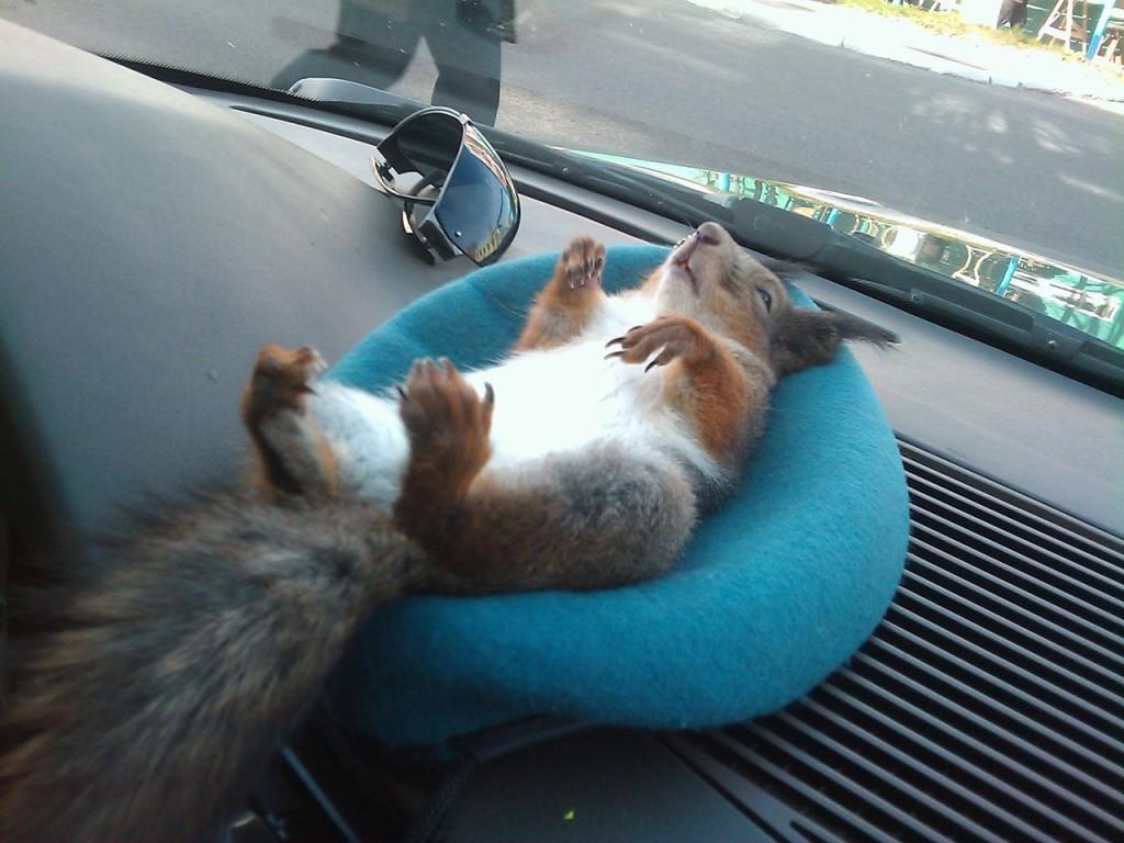 что нужно возить с собой в машине